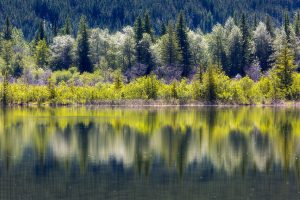 An abstract image of trees reflecting in a glassy lake in shades of lime green, forest green, and white.