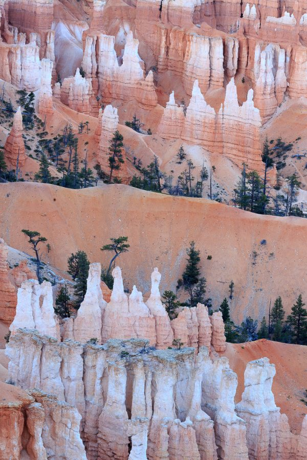 An abstract image from Bryce Canyon National Park in tones of peach, white and forest green.