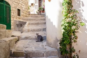 A cat pauses on a stone stairway in Castelmezzano, Italy.