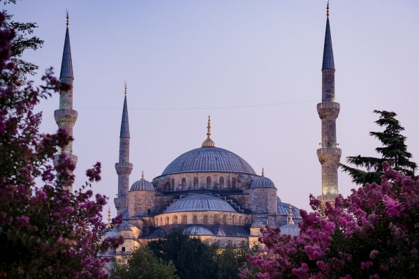 A travel photograph showing the minarets of the Blue Mosque rising up through pink flowers to a blue sky at dusk in Istanbul, Turkey