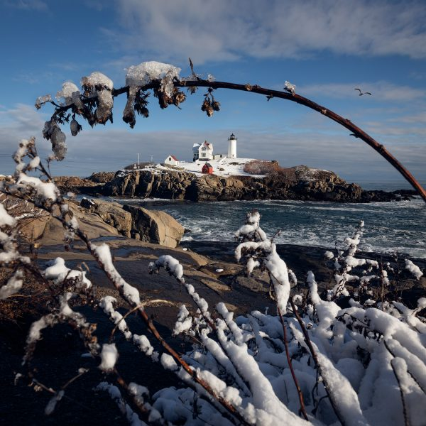 The nubble lighthouse in york beach maine as seen through a snowy branch