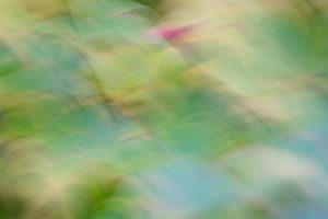 An abstract photo of leaves that is in hues of blue, green and yellow.
