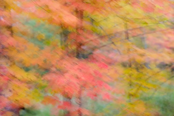 An abstract photo of colorful fall foliage displaying colors of red, yellow and green.
